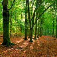 Het Robbenoordbos en het Dijkgatbos is een bos ten noorden van Wieringerwerf en ten zuiden van Den Oever, dit prachtige bos van 600 hectare heerlijk beschut wandelterrein ligt op nog geen 5 minuten fietsen van de vakantiewoningen.